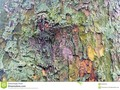A close-up of a pastel coloured tree trunk, which may be suitable as a background or texture. #abstract #background