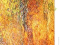 A close-up of a colourful tree trunk, which may be suitable as a background or texture. …