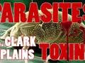 #youtube Dr. Hulda Clark Explains Parasites and Toxins Cause All Diseases