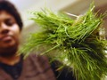 Maine pine needles yield antiviral compounds getmixapp