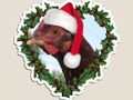 * Christmas Chicken * Rhode Island Red Holiday Die-Cut Magnet by Gravityx9 at Redbubble * A…