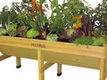What Vegetables Can You Grow In Containers?