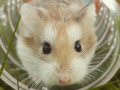 Welcome to Animals Are Best! #hamsterpic #animals #animalphotos #cuteanimals via wordpressdotcom