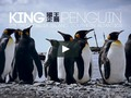 "I just liked ""King Penguin, Antarctica 國王企鵝"" on #Vimeo:"