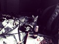Mikaella, beer, pizza, cigarettes, music, weed, bed…. RELAX!  .  .  .  .  .  .  .  .  .  .  #cat #cats #catsagram #catstagram #instagood #kitten #kitty #kittens #pet #pets #animal #animals #petstagram #petsagram #photooftheday #catsofinstagram #ilovemycat #instagramcats #nature #catoftheday #lovecats #furry #sleeping #lovekittens #adorable #catlover #instacat #420 #weed