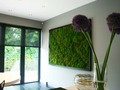 Which of these moss wall styles would work well in your home? #hometips #interiors