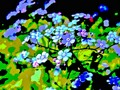 "New art for sale! ""Forget-Me-Nots"". Buy it at:"