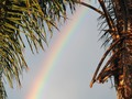 Rainbow and Palm Tree