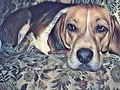 "Featured Art of the Day: ""Sleepy pup"". Buy it at:"