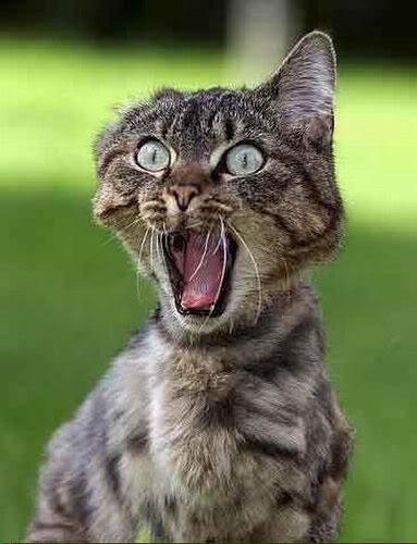 Memes For > Hahaha Cat