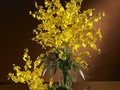 Dancing Lady Silk Orchid Flowers (6 Stems) : 2009    Dancing Lady Silk Orchid Flowers (6 Stems) Are you looking for something personal to give that special loved one?
