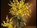 Yellow Dancing Lady Silk Orchid Flowers (6 Stems) : 2009  $150.00 #julieannsboutique #artificial #silk #silkflowers #flowers #arrangement #fakeflowers #homeandgarden #home #interiordesign #products #forsale #forhome #shop #shoppingonline #shopnow #products # buy #buynow #buyonline #online #onlineshopping #onlineboutique #availablenow #availableonline #decor #beautiful #decoration # accessories