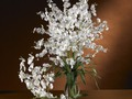 White Dancing Lady Silk Orchid Flowers (6 Stems) 2009WH    Dancing Lady Silk Orchid Flowers (6 Stems) Are you looking for something personal to give that special loved one?