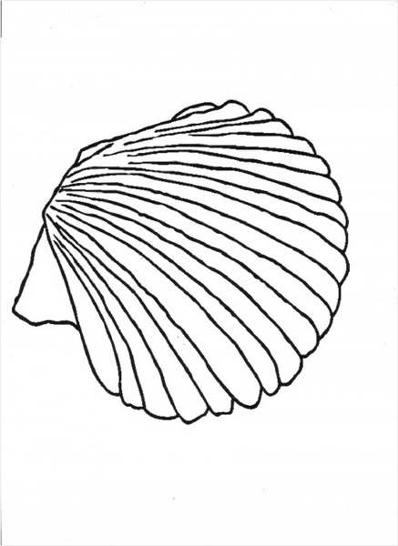 Clam Shell Drawing
