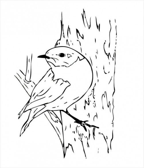 Eastern bluebird drawing for Eastern bluebird coloring page