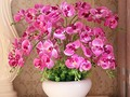 Potted Orchids To Beautify Your Home