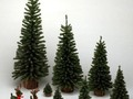 Are You Wondering About What Christmas Tree To Buy?