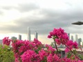 The city #panama #panamá #flowers #wild #wildlife #photography #photographer #photooftheday #photographylovers #instapic #instalike #instagram #cute #love #nature #city #cin #peopleartstudio #summer #sunset #sun #clouds