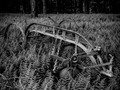 For #monochromemonday    #ferns #farmtools #blackandwhite #monochrome #bnwphotography #darkaesthetic #lefttorustaway #photoedits #chrislordnyc #chrislord #pixielatedpixels #creativeimagery #nycphotographer #justgoshoot #artistry_lords #artofvisuals #everything_edited #noir #fineart_photobw #bnw_rose #bnw_zone — view on Instagram