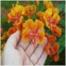 цветы из бисера схемы бесплатные.